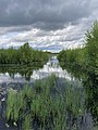 Olmanskie swamps in Belarus - May 2021 05.jpg