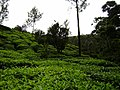 On The Way Munnar Hill Station - panoramio (6).jpg