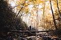 On a fallen tree in the autumn (Unsplash).jpg