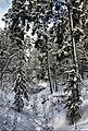 Ostrovsky District, Kostroma Oblast, Russia - panoramio - Andris Malygin (3).jpg