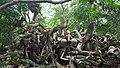 Osun Sacred Grove Forest - Sculptures -Tosin Odunfa.jpg