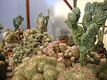Other worldly cactuses.jpg