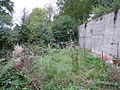 Overgrown garden - geograph.org.uk - 1535699.jpg