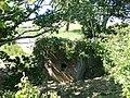 Overgrown section of Yaverland Battery.JPG