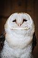 Owls @ Dragonheart, Enschede (9546873201).jpg