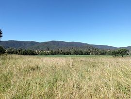 Paddocks Sandy Creek Queensland.jpg