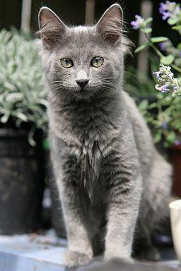 Sangue nelle feci del gatto - Cause - Cosa fare
