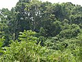 Palenque, Chis., Mexico - panoramio (36).jpg