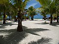 Palms, Beach and the Sea (5307721736).jpg