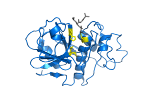 Cysteine protease - Image: Papain enzyme