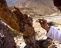 Papery bark of Boswellia Sacra.jpg