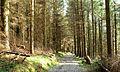 Path, Castlewellan Forest Park (2) - geograph.org.uk - 1246440.jpg