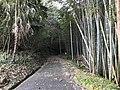 Path near Shin-Toyotsu Station 4.jpg