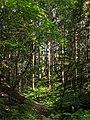 Path to a sunny patch in Gullmarsskogen ravine 3.jpg