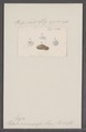 Patula circumcessa - - Print - Iconographia Zoologica - Special Collections University of Amsterdam - UBAINV0274 091 04 0024.tif
