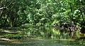 Peach Creek, Lake Houston Wilderness Park, Montgomery County, Texas, USA (May 2013).jpg