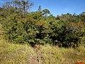 Pequeno córrego com mata nativa preservada na Rodovia vicinal Altinópolis-Patrocínio Paulista-Itirapuã(Rodovia do Leite) - panoramio.jpg