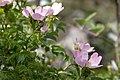 Persephone Nature Trail, Troodos, Cyprus - panoramio (5).jpg