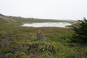 Pescadero State Beach - Pescadero marsh located across Highway 1 from the middle and northern beaches