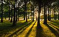 Petworth Park-Sun glimmering through the trees.jpg