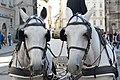 Pferdeköpfe.jpg