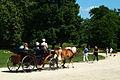 Pferdekutschfahrt im Georgengarten Hannover - alles ganz entspannt.jpg