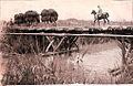 PikiWiki Israel 18652 Settlements in Israel.jpg
