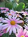 Pink flower8.jpg