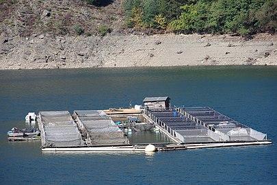 Pisciculture sur le lac de Villefort.jpg
