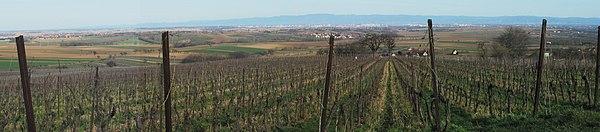 Plaine Alsace Scharrach.JPG