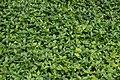 Plant - Guelph, Ontario 22.jpg