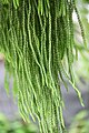 Plant of Thailand - 23.jpg