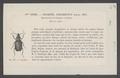 Plochionus - Print - Iconographia Zoologica - Special Collections University of Amsterdam - UBAINV0274 010 08 0035.tif