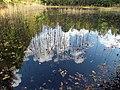 Pond Cameron NC 3850 (15568521967).jpg