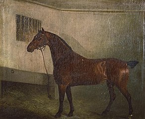 Portrait of a hunter in stable