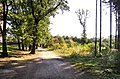 Prague Kunraticky Forest E2.jpg