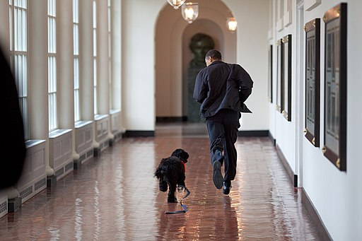 President Barack Obama runs down the East Colonnade with family dog, Bo, on the dog's initial visit to the White House on March 15, 2009