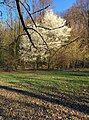 Primavera al Parco dell'Airone - panoramio.jpg
