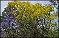 Purple Yellow Blue at Grafton-5 (22809051992).jpg