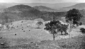 Queensland State Archives 371 Conondale looking over Conondale Homestead Mary River c 1931.png