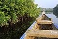 Rachel Zack Mangroven in Ghana B1 B001.jpg