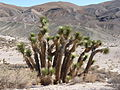 Red Rock Canyon State Park CA 003.JPG