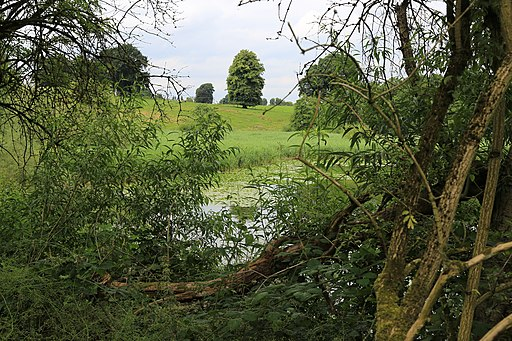 Reed beds Budworth Mere (geograph 5049016)