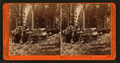 Remains of the Father of the Forest, Mariposa Grove, Mariposa County, Cal, by Watkins, Carleton E., 1829-1916 3.png