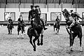 Représentation publique du Cadre noir-19052012-3.jpg