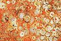Restes de coquillages et d'algues sur un voile de quille (19).JPG
