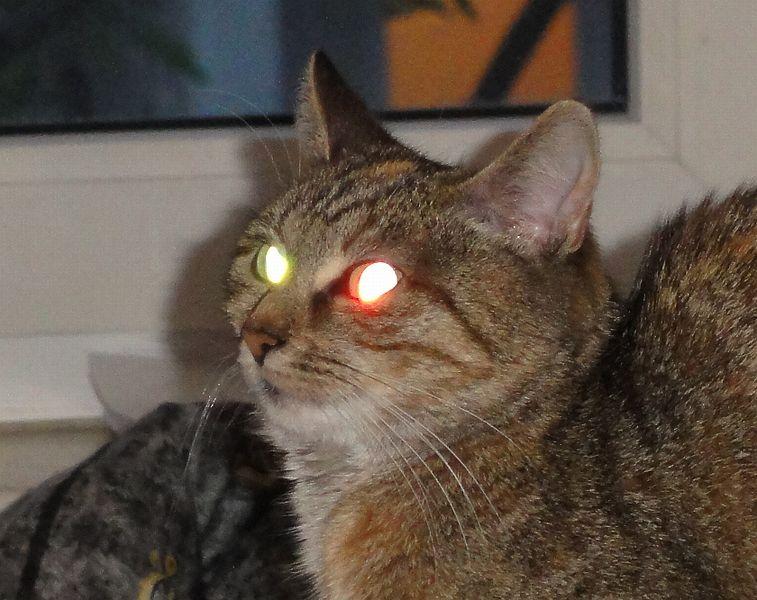 Cat With Milky Eye