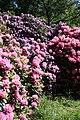 Rhododendronpark Bremen 20090513 106.JPG