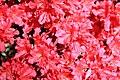 Rhododendronpark Bremen 20090513 242.JPG
