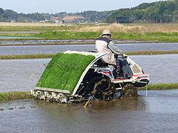 مزارع ياباني يستعمل آلة لشتل الأرز في محافظة تشيبا.
